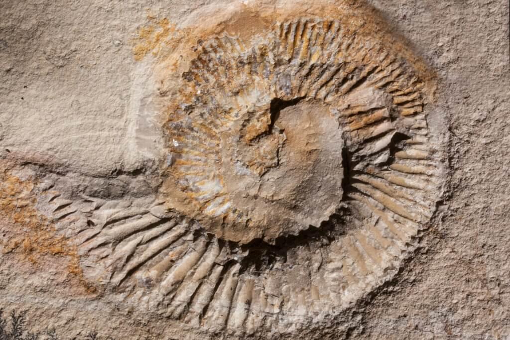 Fossilien Klopfen
